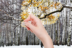 Hand deletes winter forest by rubber eraser Stock Photo