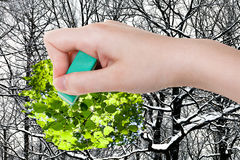 Hand deletes winter woods by rubber eraser Royalty Free Stock Photo