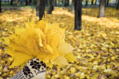 Hand in den Handschuhen, die einen Blumenstrauß der Blätter anhalten Stockfoto