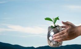 Hand der Frau ein Glas mit Münzen und Betriebsdem wachsen halten lizenzfreies stockbild