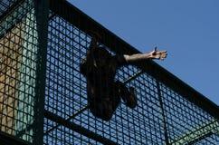 Hand der Freiheit Lizenzfreie Stockbilder