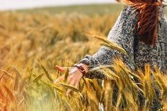 Hand der jungen Frau auf einem Weizengebiet als Erntekonzept Stockbild