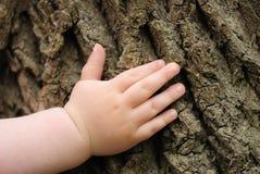 Hand der Kinder ist auf einem alten Stumpf Lizenzfreies Stockfoto