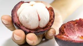An Hand der Mangostanfrucht/Mangostanfrucht auf Weiß Stockbilder