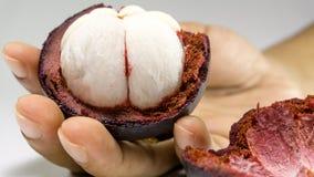 An Hand der Mangostanfrucht/Mangostanfrucht auf Weiß Stockfoto