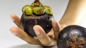 An Hand der Mangostanfrucht/Mangostanfrucht lokalisiert auf Weiß Stockbilder