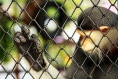 Hand des Affen Stockbild