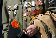 Hand des Kriegsveteranen mit Tulpe Stockfoto