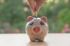 Hand des Mannes Münze und Tropfen in das Sparschwein halten Flosse auf Lager Stockbilder