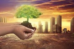 Hand, die Baumanlage auf Boden hält lizenzfreie stockbilder