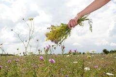 Hand, die Blumenstrauß hält Lizenzfreie Stockfotografie