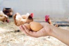 Hand, die braune Eier im Hühnerhaus hält Lizenzfreie Stockbilder