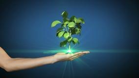 Hand, die das digitale Grünpflanzewachsen darstellt Stockfotografie
