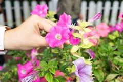 Hand die de mooie bloem houden Stock Afbeeldingen