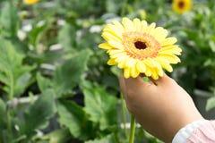 Hand die de mooie bloem houden Stock Foto
