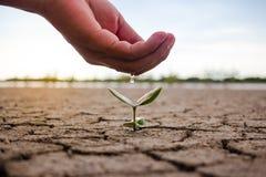 Hand, die den Boden und den Baum unfruchtbar wässert stockfotografie