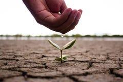 Hand, die den Boden und den Baum wässert Stockfotos