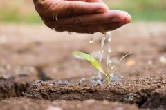 Hand, die den Boden unfruchtbar wässert stockbilder