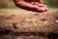 Hand, die den Boden unfruchtbar wässert stockfoto