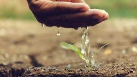 Hand, die den Boden unfruchtbar wässert lizenzfreies stockbild