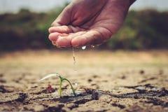 Hand, die den Boden unfruchtbar wässert lizenzfreie stockfotografie