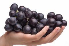 Hand die druiven houdt Royalty-vrije Stock Afbeeldingen