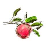 Hand die een appel trekken Stock Afbeeldingen