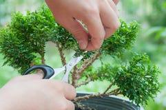 Hand die een bonsaiboom snijden Stock Foto's