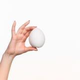 Hand die een ei op witte achtergrond houden Stock Fotografie