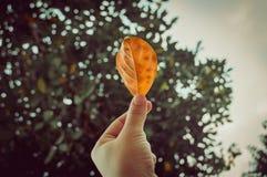 Hand die een geel blad op de achtergrond houden zijn er de herfstbomen in het bos of het park Royalty-vrije Stock Foto