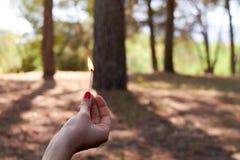 Hand die een gelijke op brand in het bos houden royalty-vrije stock afbeelding
