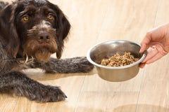 Hand die een kom met maaltijd voor hond houden royalty-vrije stock foto