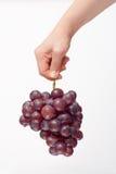 Hand, die ein Bündel der roten Trauben anhält Lizenzfreies Stockbild