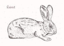 Hand, die ein Kaninchen zeichnet Lizenzfreie Stockfotografie