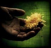 Hand, die eine Blume anhält Stockfoto