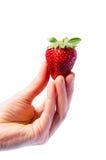 Hand, die eine Erdbeere anhält Stockbilder