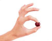Hand, die eine Kirsche hält Getrennt auf weißem Hintergrund Stockbilder