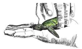 Hand, die eine kleine Meeresschildkröte hält Stockfotos
