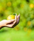 Hand, die eine Orange auswählt Lizenzfreie Stockfotografie