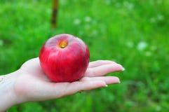 Hand, die einen Apfel anbietet Stockfotos