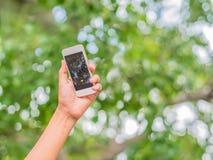 Hand, die Foto unter Baum macht Lizenzfreie Stockbilder