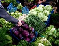 Hand, die frisches organisches Gemüse auswählt Lizenzfreie Stockfotos