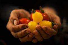 Hand, die Gemüse und Früchte hält Stockfoto