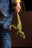 Hand, die grünen Dinosaurier hält Stockbild