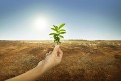 Hand, die Grünpflanze mit Sonnenlicht hält stockfotos