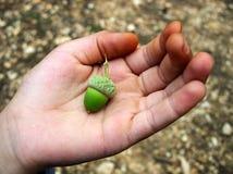 Hand die groene eikel tot een kom vormt Royalty-vrije Stock Afbeelding