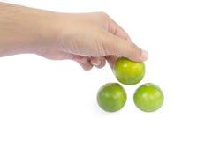 Hand die groene kalk houden Stock Afbeeldingen