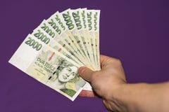Hand die groene Tsjechische bankbiljetten houden stock afbeeldingen