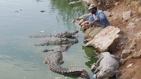 Hand die hongerige krokodillen voeden stock foto