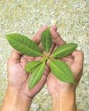 Hand, die Jungpflanze hält Lizenzfreie Stockfotos